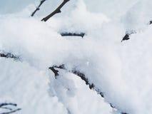 Neige sur le brunch 4 images stock