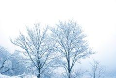 Neige sur les arbres Photo stock