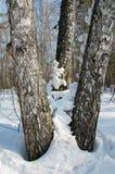 Neige sur les arbres Photographie stock libre de droits
