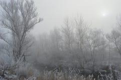 Neige sur les arbres Images stock