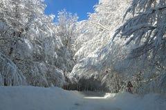 Neige sur les branches Image stock