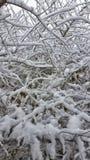 Neige sur les branches Photos libres de droits
