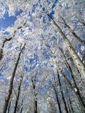Neige sur les branches d'arbre Photographie stock