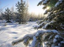 Neige sur les branches de pin Photo stock