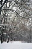 Neige sur les branches des arbres Forêt congelée photos stock