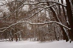 Neige sur les branches des arbres Forêt congelée photo libre de droits