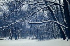 Neige sur les branches des arbres Forêt mystique d'hiver photos stock