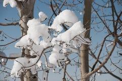 Neige sur les branches nues Image stock