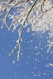 Neige sur un arbre Photo stock