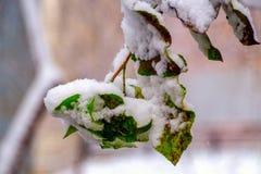 Neige sur un branchement Photos libres de droits