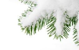 Neige sur un branchement d'arbre de sapin Photographie stock