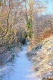 Neige sur un chemin forestier photographie stock libre de droits
