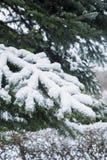 Neige sur un pinetree Photographie stock