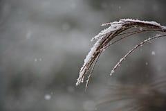 Neige sur un tassle Image libre de droits