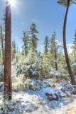 Neige tombant au Nevada photos libres de droits