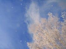 Neige tombant des arbres de neige-coverd Photos stock