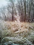 Neigez au-dessus de l'herbe sèche, hiver tôt, Russie Image stock