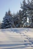 Neigez dans la forêt et les empreintes de pas du lapin Image libre de droits