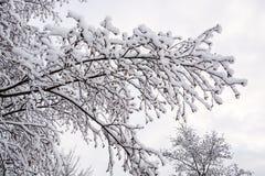 Neigez sur des brunchs d'arbre en hiver BRITANNIQUE 4 Photo libre de droits