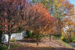 Neighborhood Autumn Colors 5 Royalty Free Stock Images