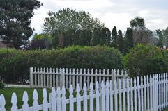 White Picket Fence Image of Lines Angles Layers. Neighborhood front yard enclosed in white picket fence against a backdrop of tall bushes and trees. Image of royalty free stock images