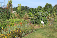 Community Vegetable Garden Royalty Free Stock Image