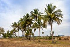 Neighborhood of Kerala Stock Photography