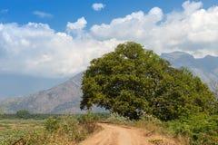 Neighborhood of Kerala Royalty Free Stock Photography