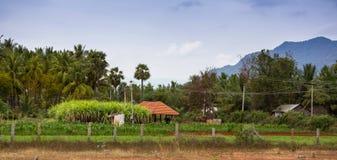 Neighborhood of Kerala Royalty Free Stock Photos