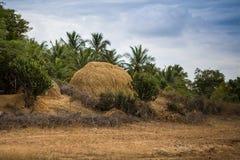Neighborhood of Kerala Stock Photos