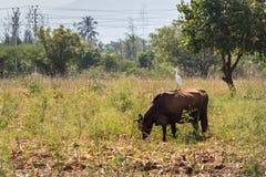 Neighborhood of Kerala Royalty Free Stock Photo