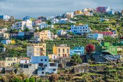 Neighborhood with plane-trees. In Canary Islands Stock Images