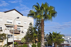Neighbourhood. Building of the modern neighbourhood and a palm tree in front of it Royalty Free Stock Image