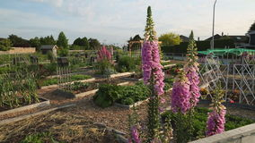 Neighbourhood Community Garden stock footage