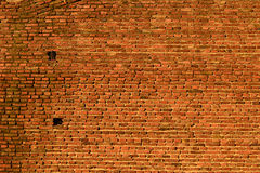 Neighbours. Two Doves in Brick Background Royalty Free Stock Image