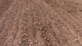 Neigung herauf Landfeld auf dem Pflügen des Traktors in der Sommerzeit stock video