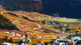 Neigung-Schiebevogelperspektive von herbstlichen Weinbergen in der Schweiz Stockfotos