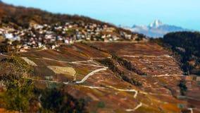Neigung-Schiebevogelperspektive von herbstlichen Weinbergen in der Schweiz Stockfotografie