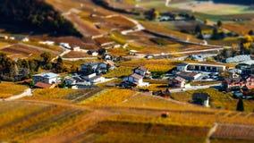 Neigung-Schiebevogelperspektive von herbstlichen Weinbergen in der Schweiz Stockbild