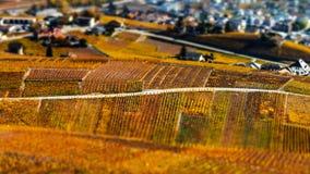 Neigung-Schiebevogelperspektive von herbstlichen Weinbergen in der Schweiz Lizenzfreies Stockfoto