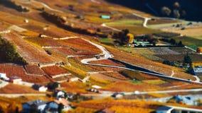 Neigung-Schiebevogelperspektive von herbstlichen Weinbergen in der Schweiz Lizenzfreie Stockfotografie