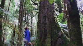 Neigung schoss oben von einem Touristen, der einen RegenBaum des Waldes in der tarkine Wildnis in Tasmanien betrachtet stock video