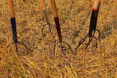 Neigungsgabeln sind in den Boden einer Weizenfeldstoppel fest Stockfotos