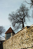 Neitsitorn of Meisjetoren in oud Tallinn Stock Afbeeldingen