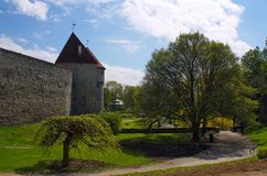 Neitsitorn. The walls of the fortress wall in the old town of Tallinn, Estonia Stock Image