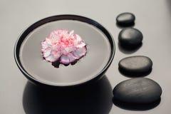 nejlika som flottörhus rosa white Fotografering för Bildbyråer