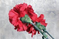 Nejlikan blommar t?tt upp R?d kryddnejlika arkivbilder