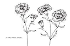 Nejlikan blommar teckningen och skissar med linje-konst Arkivfoton