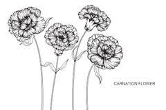 Nejlikan blommar teckningen och skissar med linje-konst på vitbaksida Fotografering för Bildbyråer