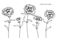 Nejlikan blommar teckningen och skissar med linje-konst på vitbaksida Arkivbilder